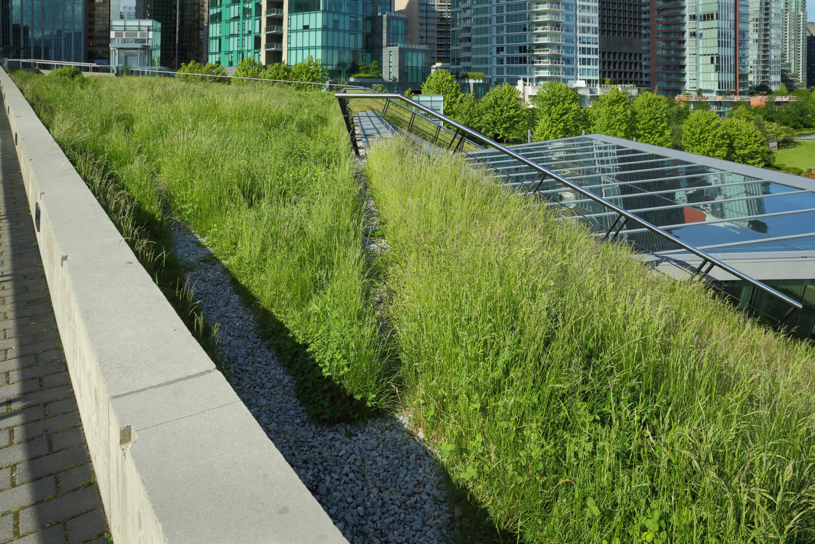 A portion of the new Vancouver Convention Center environmentally friendly, lush, 6 acre green roof.